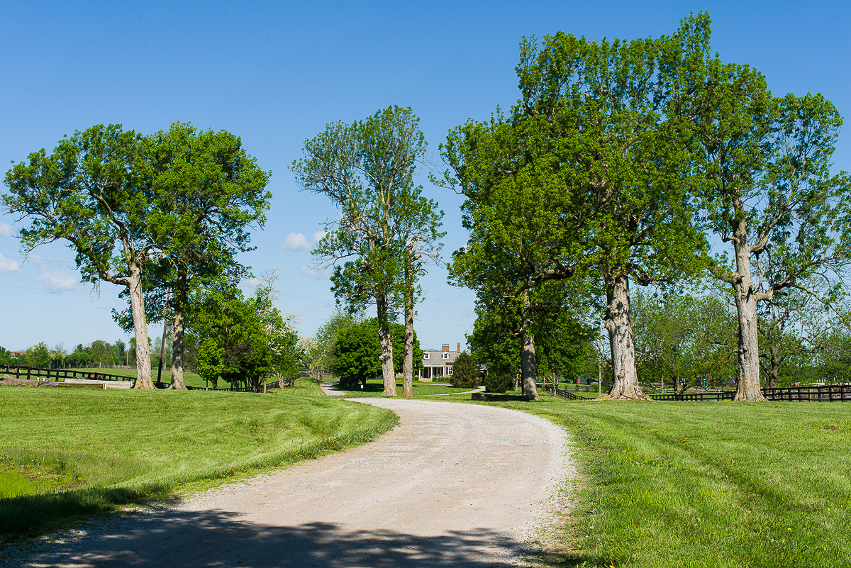 Trees at a Bluegrass Farm