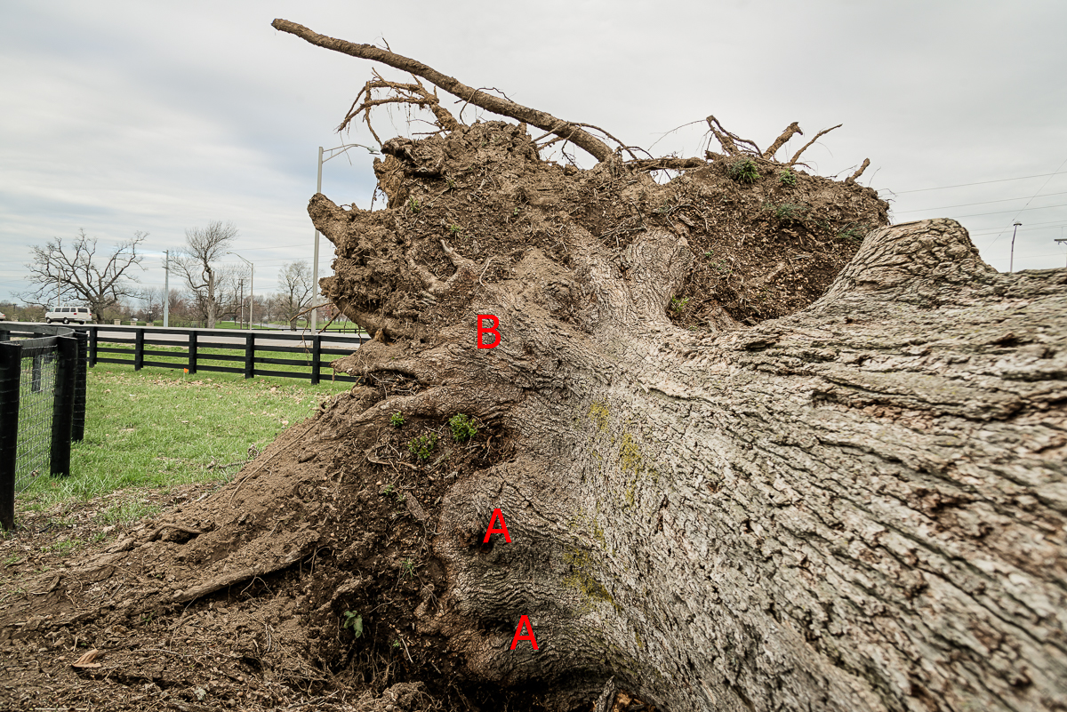damaged roots