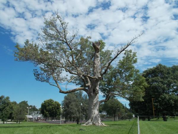Castlewood Park Blue Ash