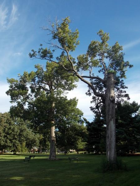 Ecton Park Blue Ashes