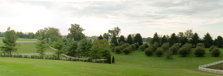 Picture of trees on a horse farm