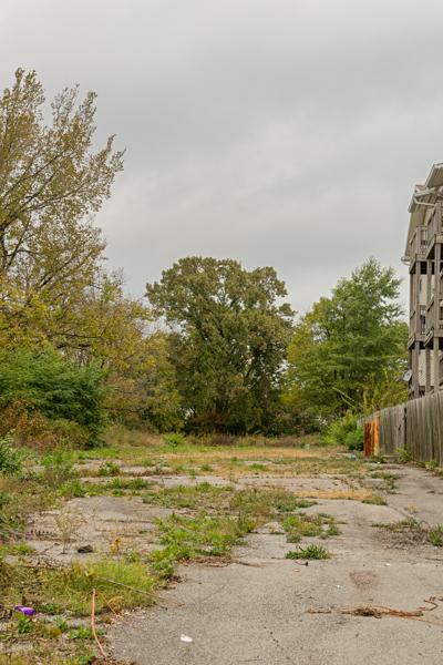Old bur oak in an abandoned lot