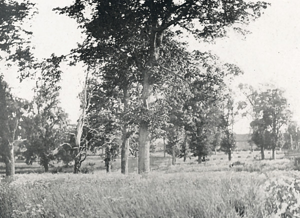 Woodland Pasture at Grasswood Farm