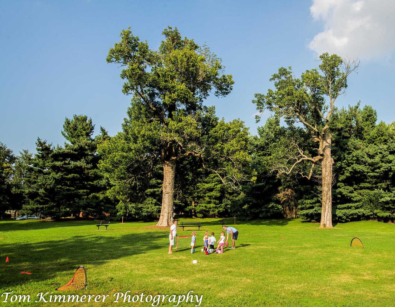 Blue ash in Ecton Park, Lexington