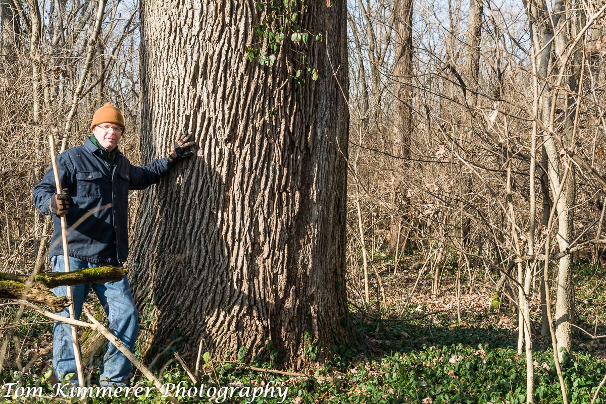 """Bur oak, 72"""" diameter, with Jim Pikull"""