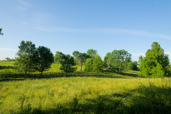 Woodford County Woodland Pasture