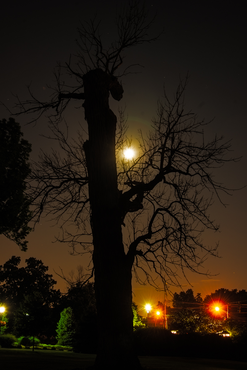 City trees by moonlight and street light