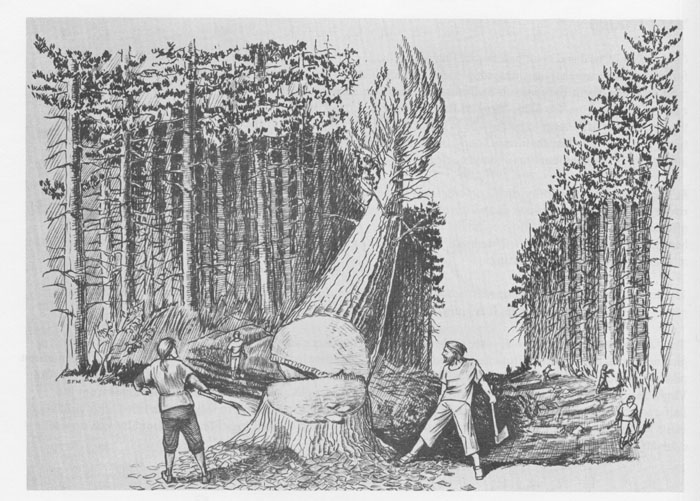 Felling a mast tree onto a prepared cushion. Source: Manning, 1979